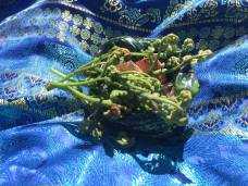 Fiddleheads join the center-piece